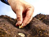 Предоставление грантов начинающим сельскохозяйственным потребительским кооперативам!